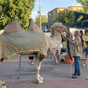 Kamelen op festival Arnhem proeft